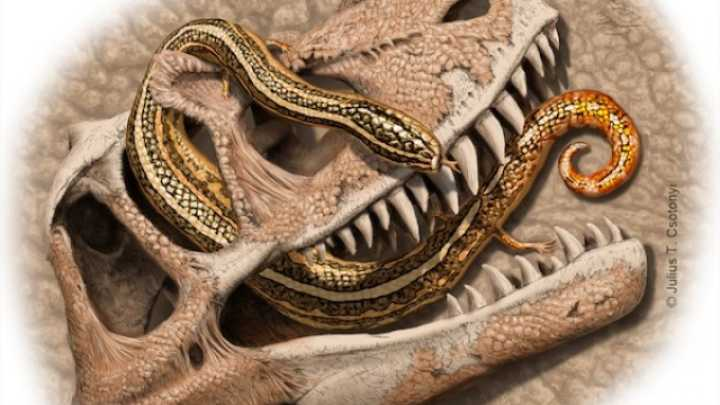 Researcher Stumbles Across Oldest Snake Fossils Ever Found In Museum