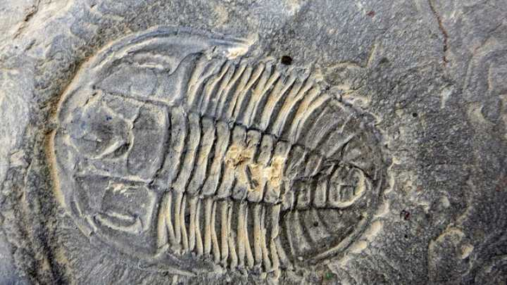 Fossils Of Burgess Shale