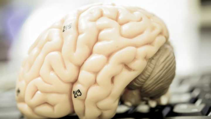 fMRI Study Reveals How Scientist's Brains Are Different From Regular Brains