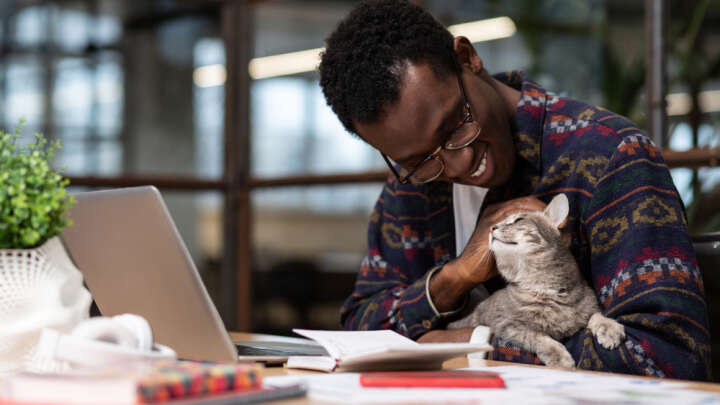 default 1606911006 while not always wfh compliant the constant attention of pets can help when we feel isolated yakobchuk viacheslav shutterstock com