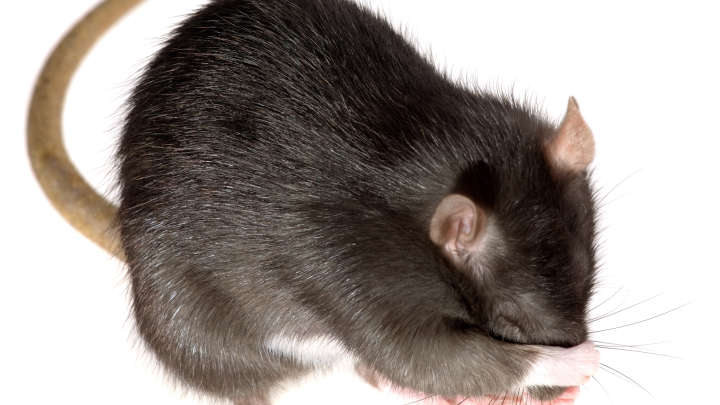 How To Apply Brain Science Of >> Gut Microbes Control Parkinson's Disease In Mice | IFLScience