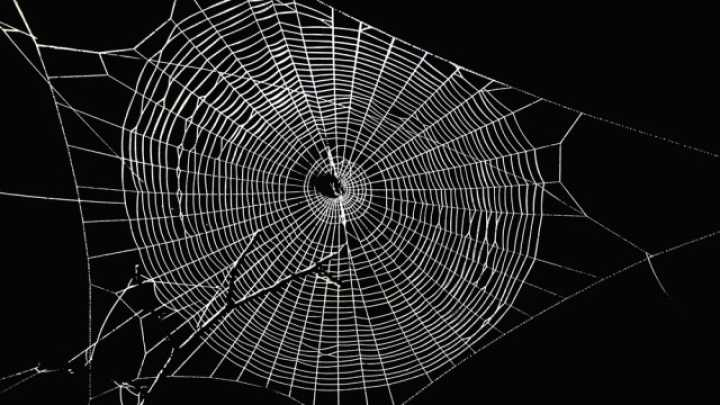 spiders create graphene infused super webs iflscience spider clip art black and white spider clip art for halloween