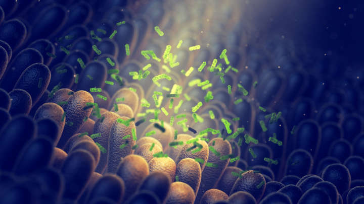 Newly Discovered Proteins Could Explain The Power Of Gut Bacteria