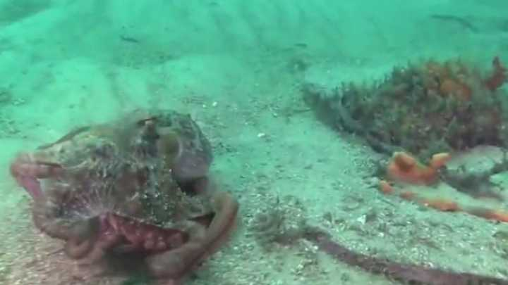 This Octopus GIF Features A Very Unexpected Twist
