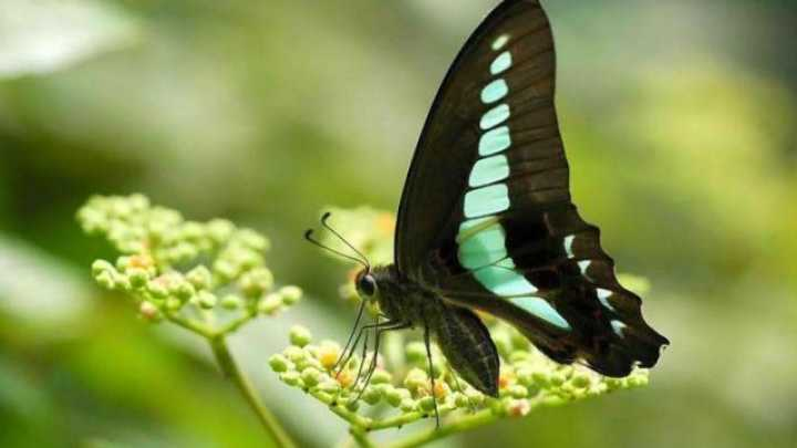 Butterfly Found To Have Fifteen Different Types Of ...