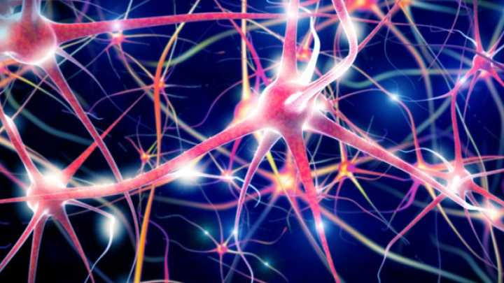 Scientists Successfully Connect Individual Neurons Using