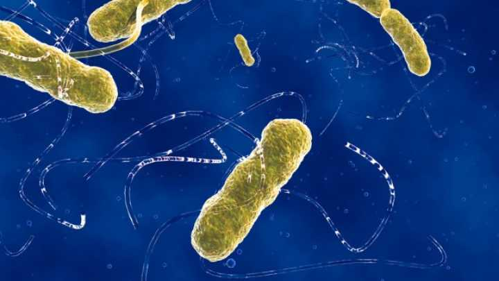 How Much Bacteria Does The Human Body Really Contain