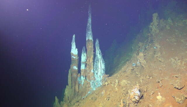 Deep-sea hydrothermal vent chimneys on Brothers volcano Northwest Caldera Wal