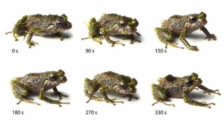 Shape-Shifting Frog Discovered In Ecuador
