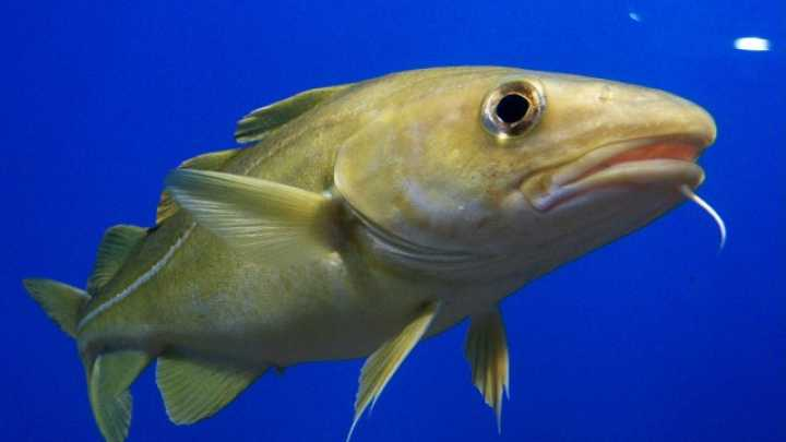 Fish Are Smarter Than You Think | IFLScience