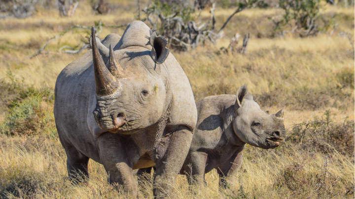 First Ever Legal Online Auction Of Rhino Horn Goes Live In