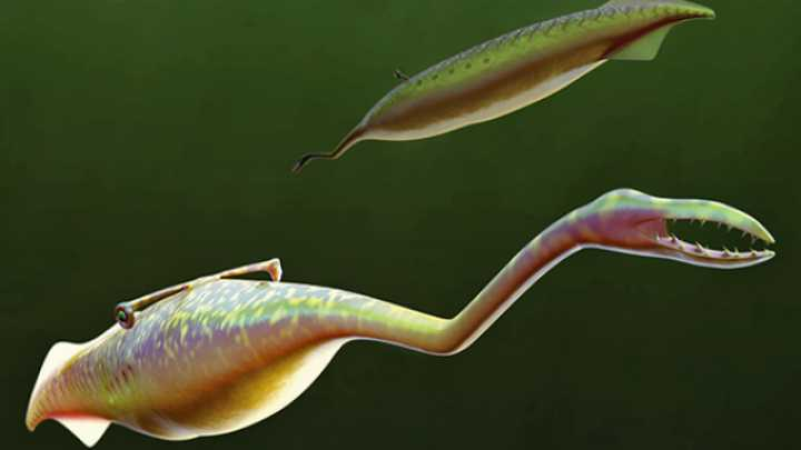 300-Million-Year-Old Eyes Confirm Tully Monster's Identity