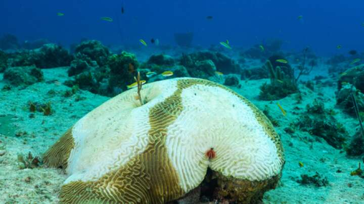 New Coral Disease Appears To Be Spread By Ships' Ballast Water