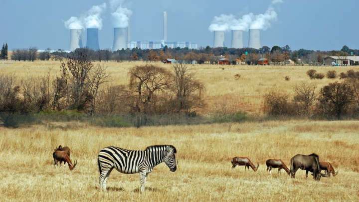 Air Pollution Found To Kill More People In Africa Than ... Air Pollution Effects On Animals Scholar