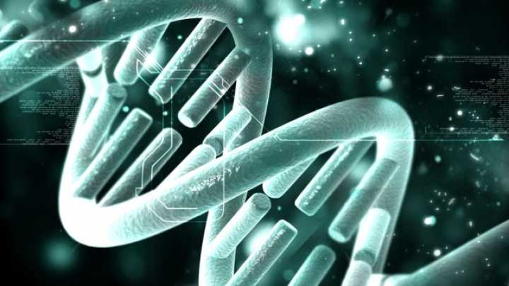 Gene Editing Cures Animal Of Genetic Disease For The First Time