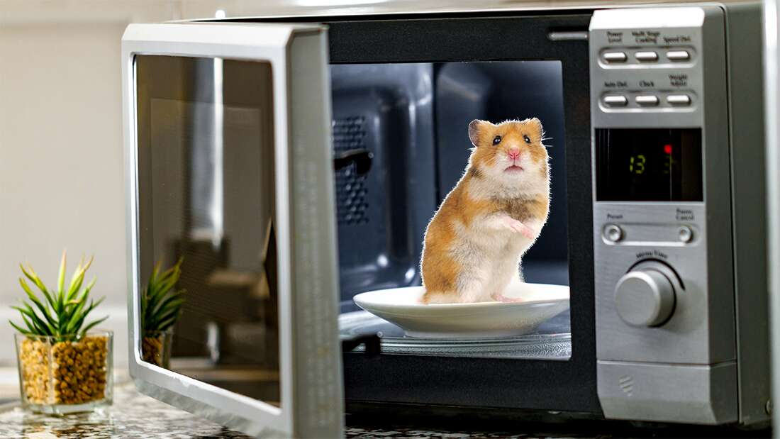 [Image: extra_large-1621353914-inside-a-microwave.jpg]