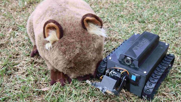 'WomBot' Burrow Explorer Is Here To Save Wombats From An Itchy Death - IFLScience