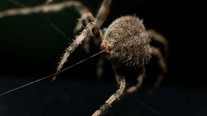 New Study Untangles How Spider Silk Is So Incredibly
