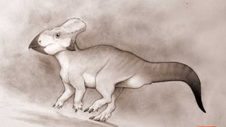 Dog-Sized Dinosaur Reveals Secrets Of Ancient 'Lost Continent'