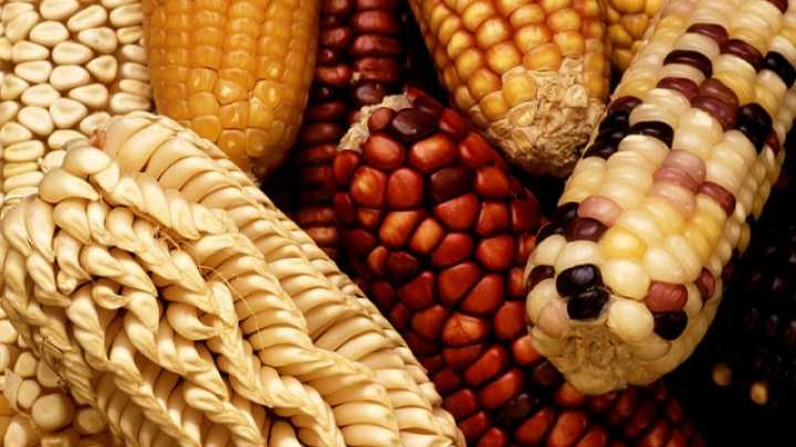 What You Need To Know About Genetically Modified Organisms  Iflscience