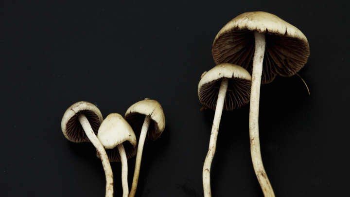 Chemists Discover The Recipe For Magic Mushrooms | IFLScience