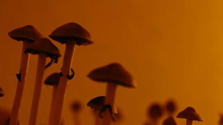 Magic Mushrooms Shown To Ease Severe Depression In Groundbreaking Study