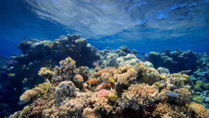 """Great Barrier Reef Downgraded To """"Very Poor"""" Condition Amid Climate Change - IFLScience"""