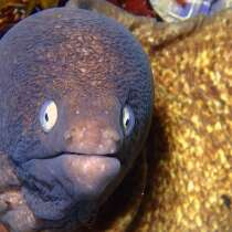 When an eel goes inside, makes you poop, nearly die, that's a moray.