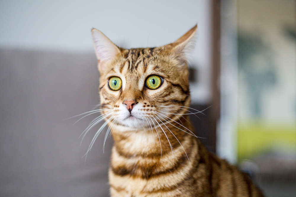 We Finally Know What Cats' Facial Expressions Mean | IFLScience