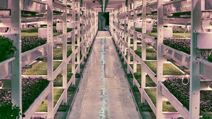 Produce From The World S First Underground Urban Farm Is