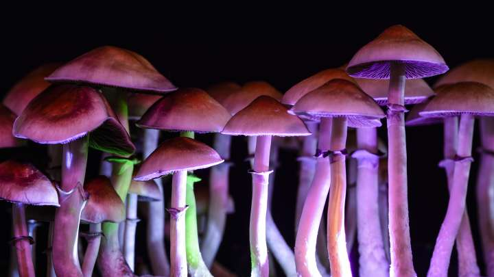 Magic Mushrooms Provide Long-Term Relief From Existential Fear In Cancer Patients