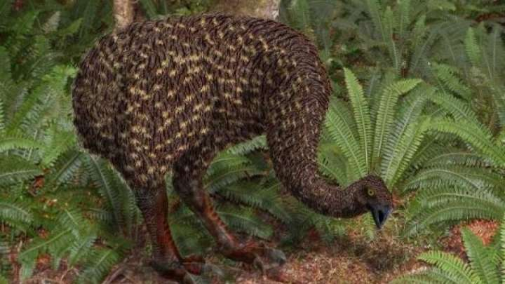 Scientists Have Reconstructed The Genome Of A Bird Extinct For 700 Years