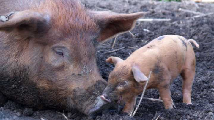 """Why Law enforcement agency Representatives usually are Oftentimes Termed """"Pigs"""" not to mention Precisely why """"Poindexter"""" is certainly Slang intended for """"Nerd"""""""